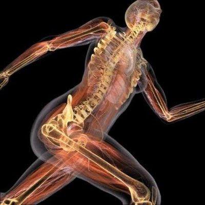 Anatomía | Bienvenidos a Descubrirlaquimica